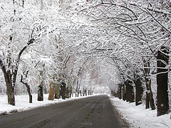 A snowy road in Mendoza Province, Argentina. Photo taken on July 15, 2010.