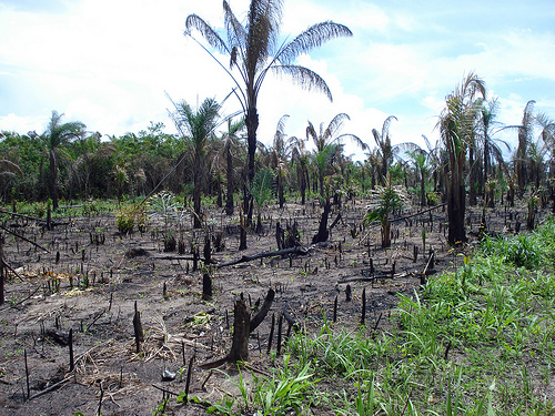 A burnt down section of the Amazon rainforest. Photo by LeRoc.