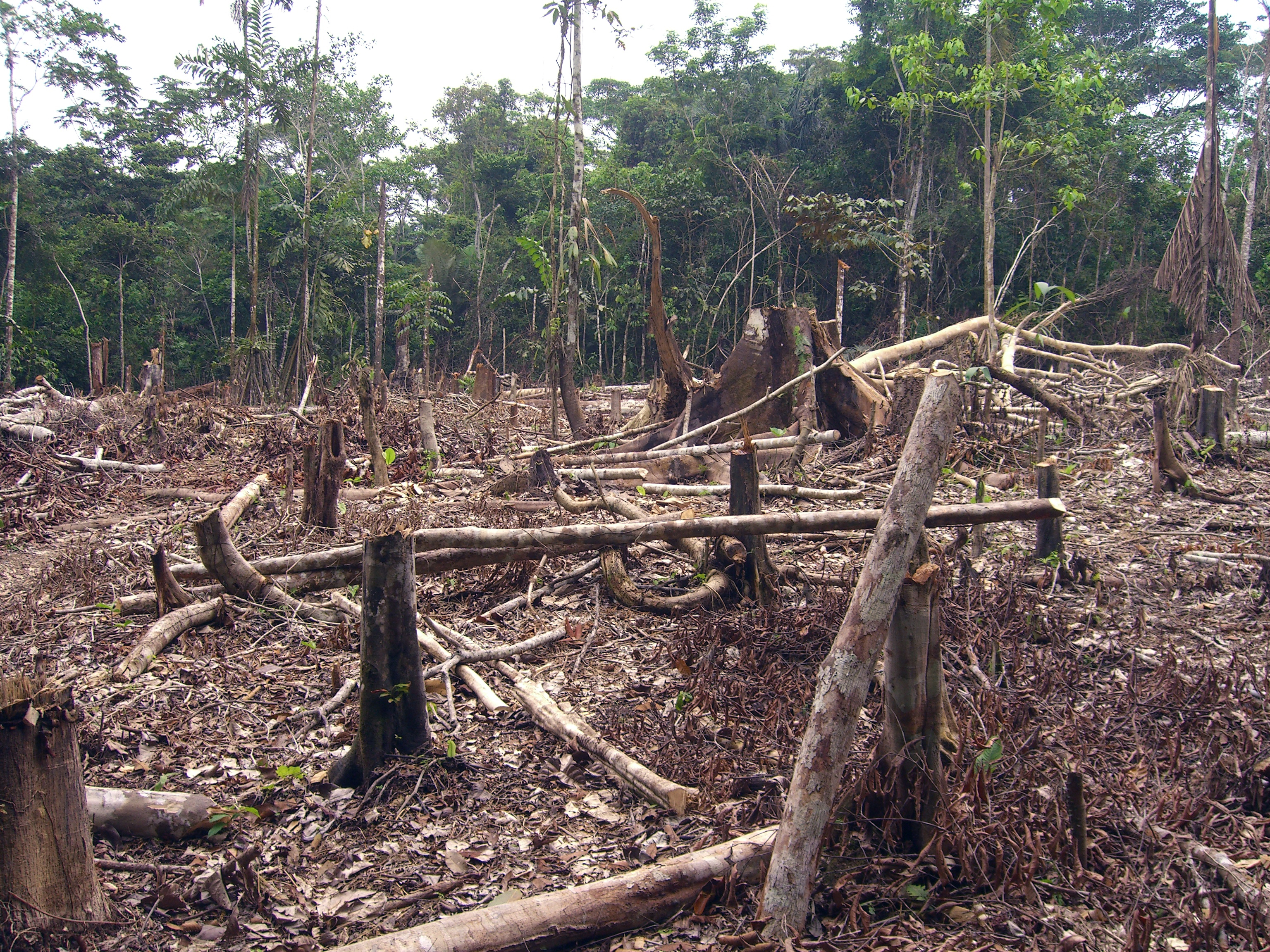 South American Leaders Sign Environmental Pact to Protect Amazon - Latin America News Dispatch
