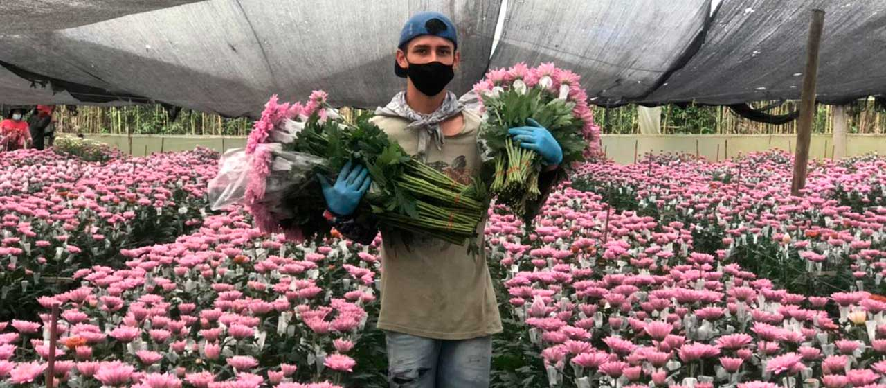 Valentine's Day could be a lifeline for struggling Colombian flower industry